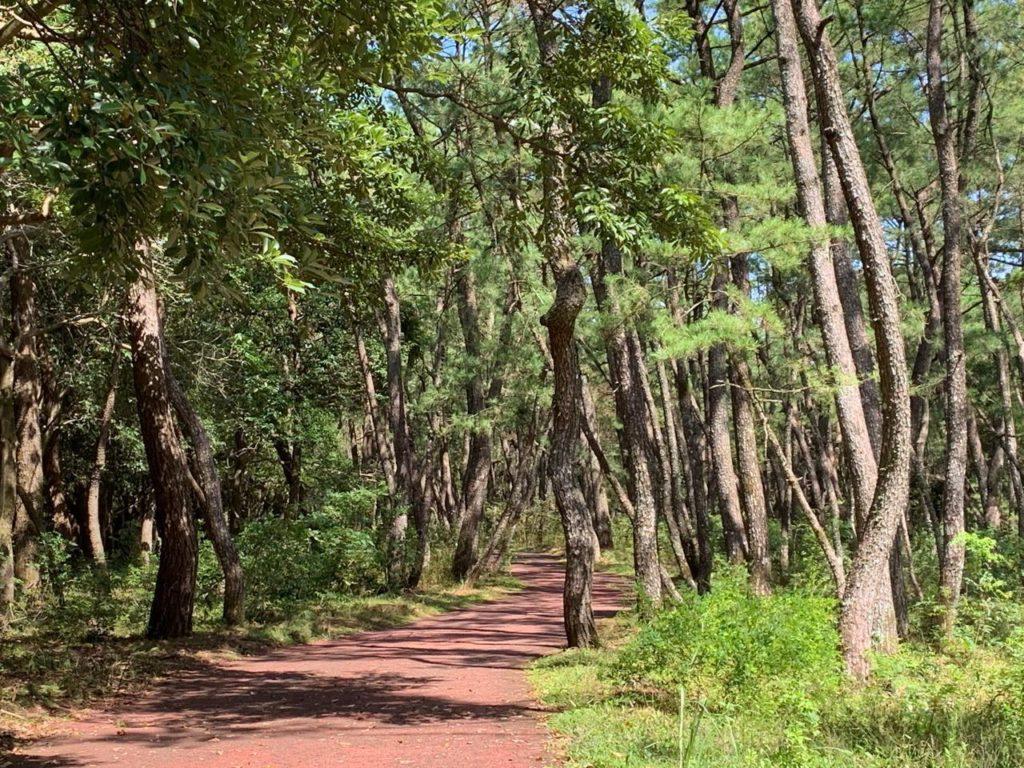 宮崎 市民の森