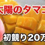 宮崎マンゴー太陽のタマゴ20万円